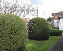 Dupouy Espaces Verts - HONTANX  - Nos prestations